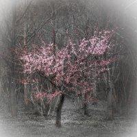 Весна :: Людмила Быстрова