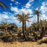 Небо, пальмы и песок. :: Sven Rok