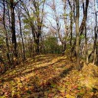 Осень в Полоцке :: Андрей Буховецкий