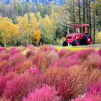 Цветочные фермы Хоккайдо :: Tatiana Belyatskaya