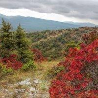 Осенний Крым :: ирина )))