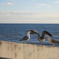 Чайки :: valeriy khlopunov