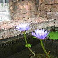 Городские цветы Таиланда. :: Лариса (Phinikia) Двойникова