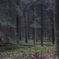 мистический лес :: Лилия Winоgradowa