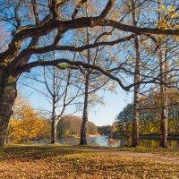 Золотая осень в парке 5 :: Виталий