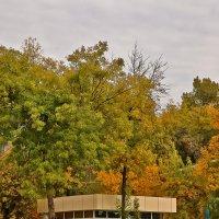 Золотая осень в Ташкенте :: Светлана