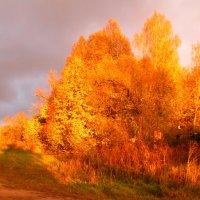 Золотая осень :: Елена Милая