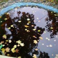 Есть в графском парке чёрный пруд... :: Ольга Кривых