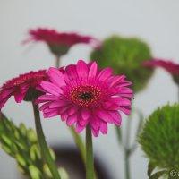 Цветочки :: Emil Buturlin