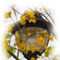 Закружили парню голову осеннею листвой.... :: Tatiana Markova