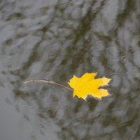 Я — осенний день,  я праздничен и чист, вместо сердца у меня —  кленовый лист. :: Tatiana Markova
