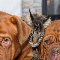 """""""Только тронь меня и я спущу на тебя своих собак!"""" :: Лариса Сафонова"""