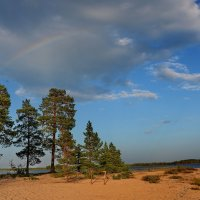 Большое Рогозеро - после дождя :: Владимир Брагилевский