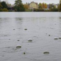 дождливый день на пруду :: Сергей Короленко