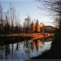 Последяя листва :: Виктор Бондаренко