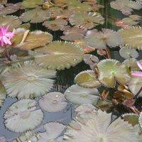 Городские цветы Таиланда :: Phinikia