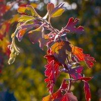 Заглянула осень в сад :: Людмила