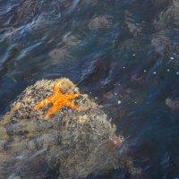В чистом океане не только звезды! :: Андрей Крючков