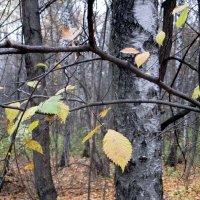Осень :: Михаил Андреев