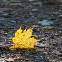 осень :: Лёха Дидус