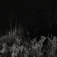 Ночь на болоте... :: Va-Dim ...