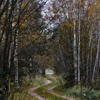 Осенняя дорога. :: Paparazzi