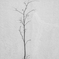 minimalism :: Сергей Ефимов