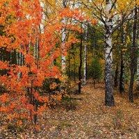 Осени холодные костры.... :: Лесо-Вед (Баранов)