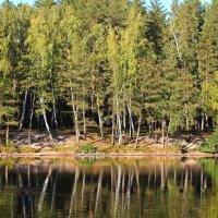 Отражение ранней осени :: Лидия (naum.lidiya)