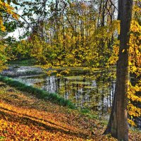 Праздник осени - золотой листопад :: Марина Волкова