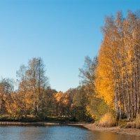 Золотая осень в парке 8 :: Виталий