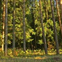 октябрь в павловском лесу :: Елена