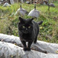 Страшнее кошки зверя нет ...))) :: Андрей Зайцев