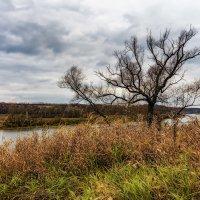 Одинокое дерево. :: Sven Rok
