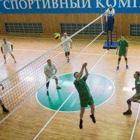Соревнования по волейболу 2016 7 :: Людмила Мозер