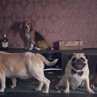 Собачьи истории. Криминальный квартет :: Тата Казакова