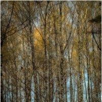 Осень в Мещерском парке . :: Игорь Абламейко