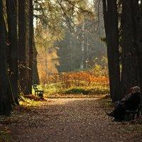 Осень жизни, как и осень года, надо не скорбя благословить... :: Ирина Румянцева