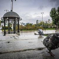 Октябрь... Екатеринбург... :: Pavel Kravchenko