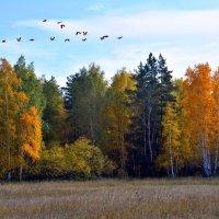 Разбросала осень краски... :: Геннадий Ячменев