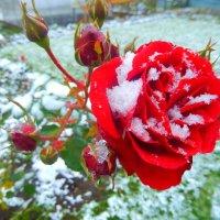 Дыхание зимы. :: ТАТЬЯНА ОСИПОВА