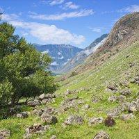 Склоны алтайских гор :: val-isaew2010 Валерий Исаев