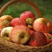 Дачные яблоки и орехи . :: Елена Kазак