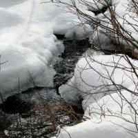 Ручей таежный,чист и свеж... :: Любовь Иванова