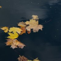 осень :: евген03 Левкович