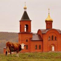 Храм во имя святителя Василия Великого :: Оксана Полякова