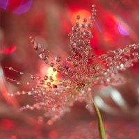 цветные сны :: Седа Ковтун