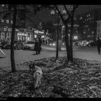 Одиночество... :: Евгений Старков
