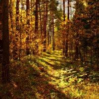 В лесу осеннем :: Вячеслав Минаев