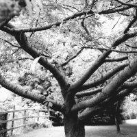 сильные ветви дерева. :: Юля Рудакова
